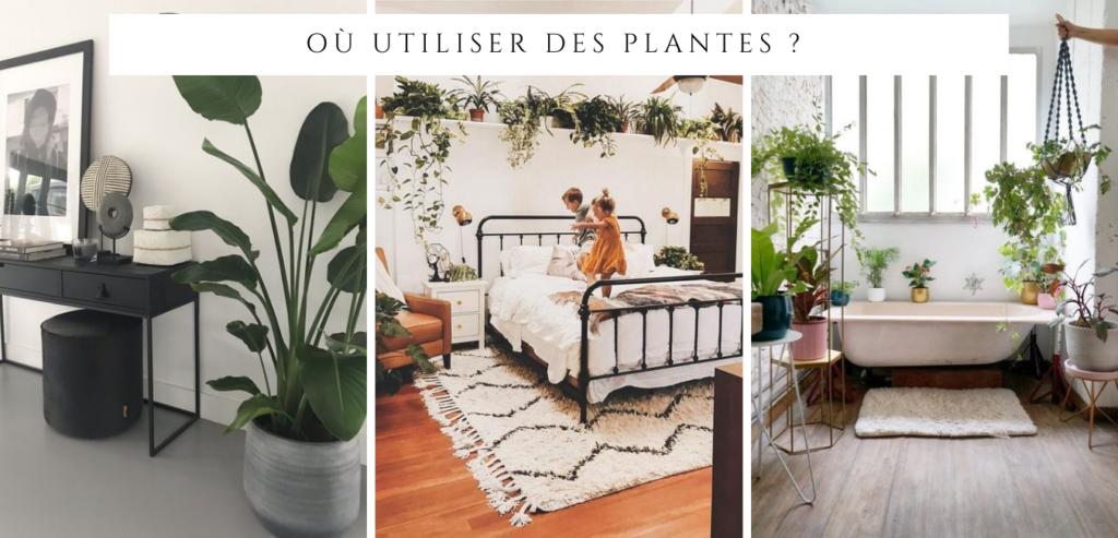 agrémenter sa décoration avec des plantes