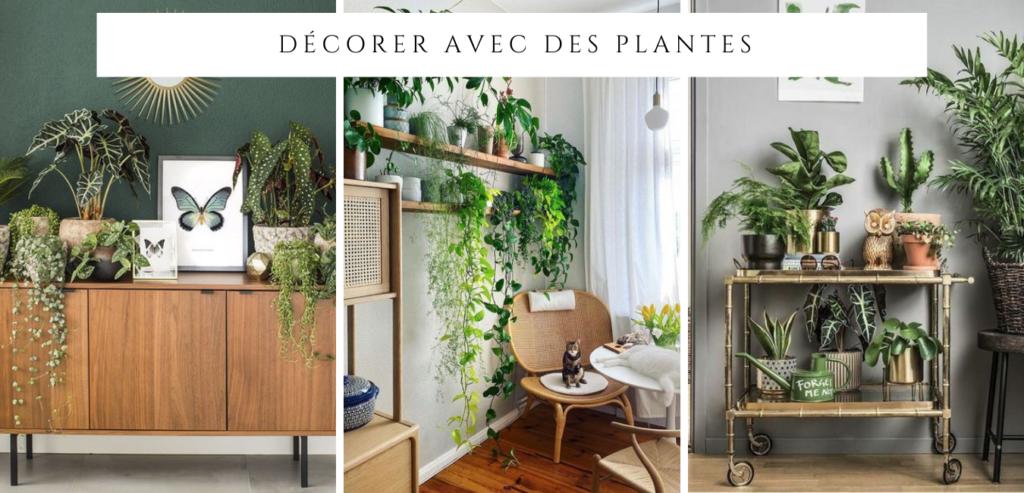 ddécorer avec des plantes